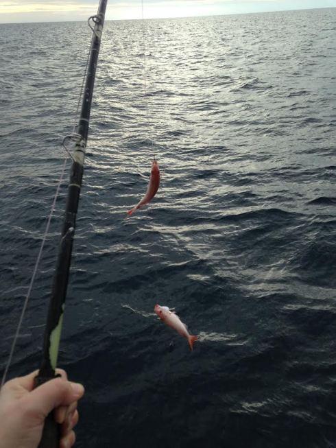 2 fishies